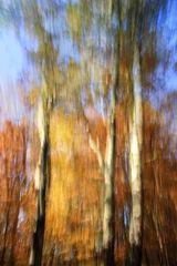 Herbstwuschbild
