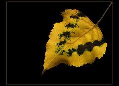 Herbstzauber #2