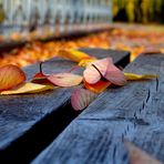 Herbstzauber...