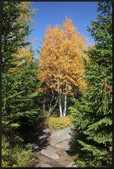 ...HerbstZauber...