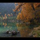 Herbstzauber am Lai da Palpuogna