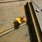 Herbstzauber eingefangen