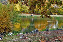 Herbstzauber - Gänse am Jrönen Märken in Neuss