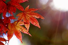 Herbstzauber I