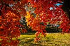 Herbstzauber in unserem Garten
