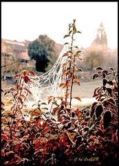 Herbstzauber in Weikersheim - Mein Garten im Herbst