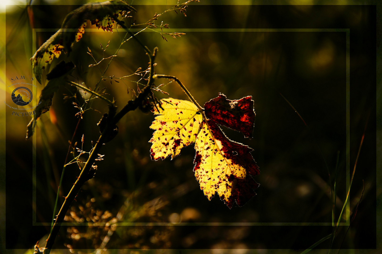 Herbstzauber - Licht und Schatten -