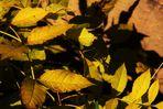Herbstzeichen 3