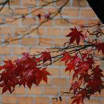 Herbstzeichen 4
