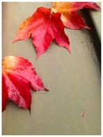 Herbstzeichen
