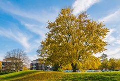 Herbstzeit (27)