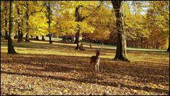 Herbstzeit  =  Brunftzeit