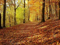 Herbstzeit (Foto-Handy K750i)