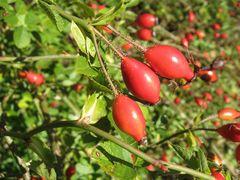 Herbstzeit in Rot