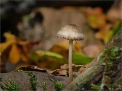 Herbstzeit ist Pilzzeit ...