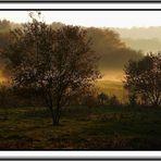 Herbstzeit- Nebelzeit