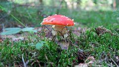 Herbstzeit - Pilzzeit 3