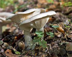 Herbstzeit - Pilzzeit