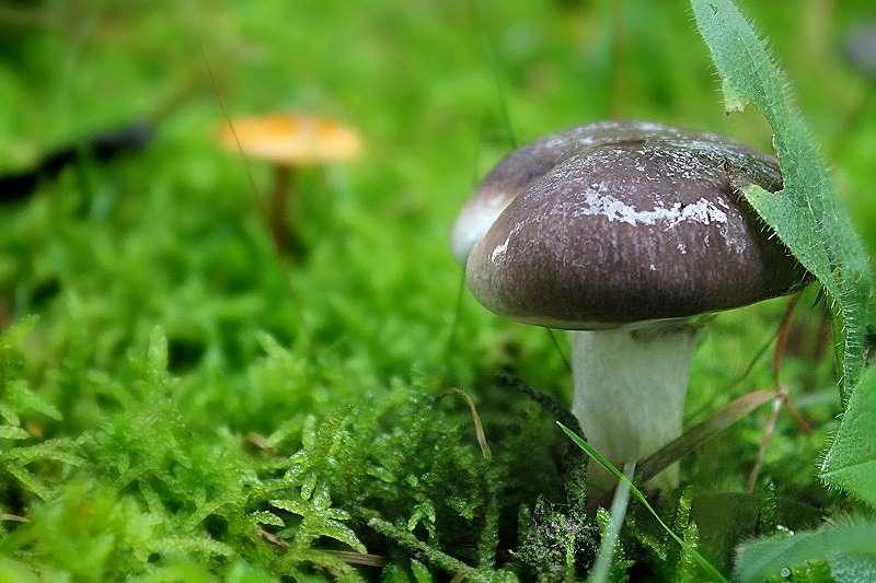 Herbstzeit = Regenzeit = Pilzzeit