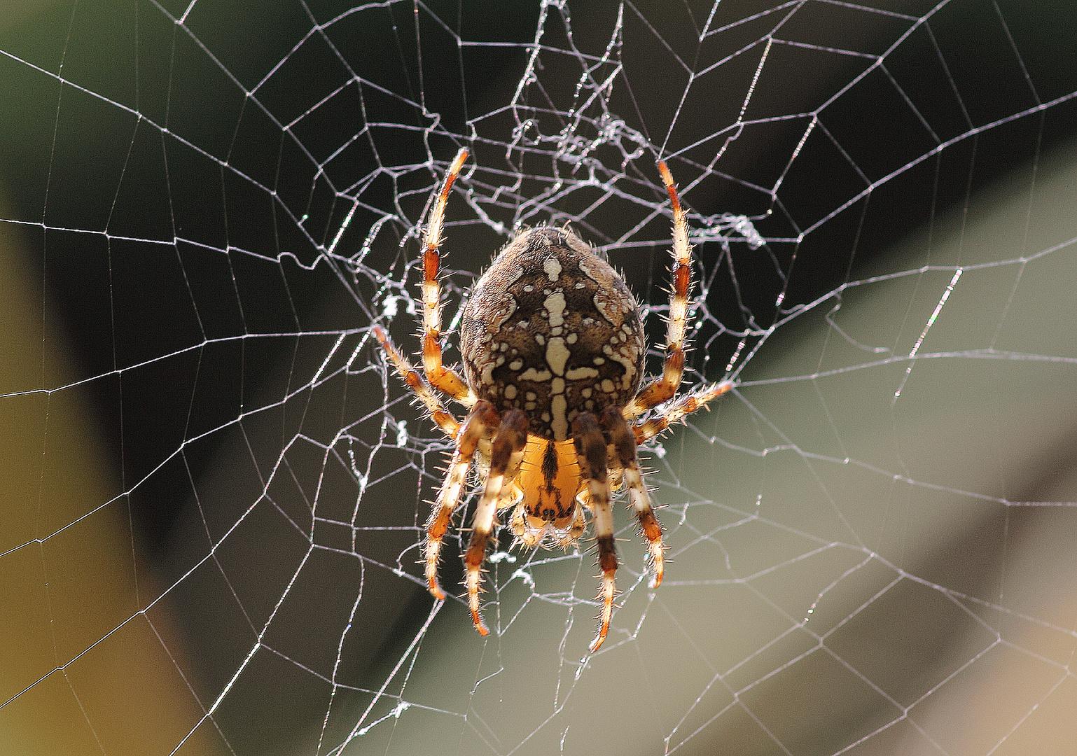 Herbstzeit Spinnenzeit