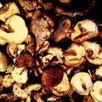 Herbstzeit Zeit für Pilzgerichte