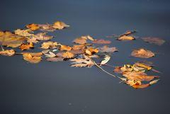 :: Herbstzeitlos ::