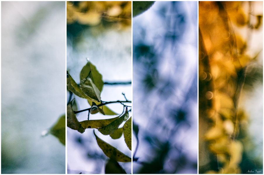 ~Herbst.Zeitlos~