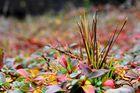 Herbstzeitmix