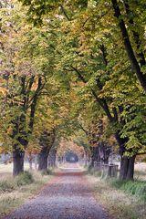 Herbstzeitstimmung