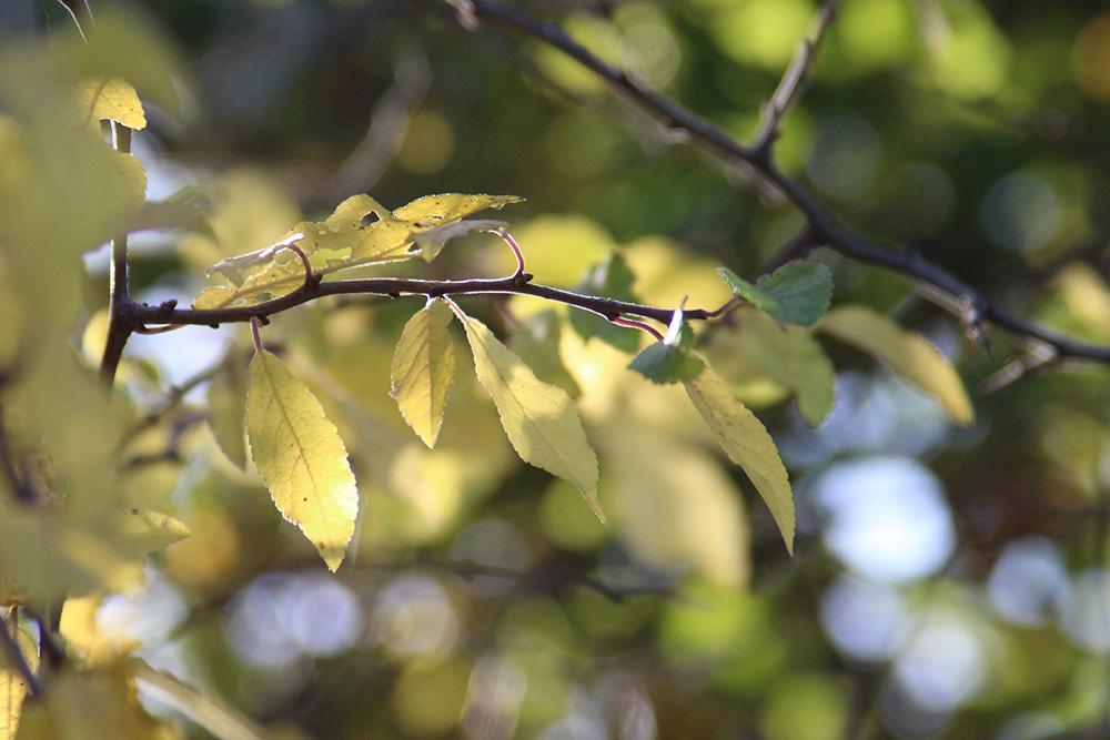 Herbstzweig