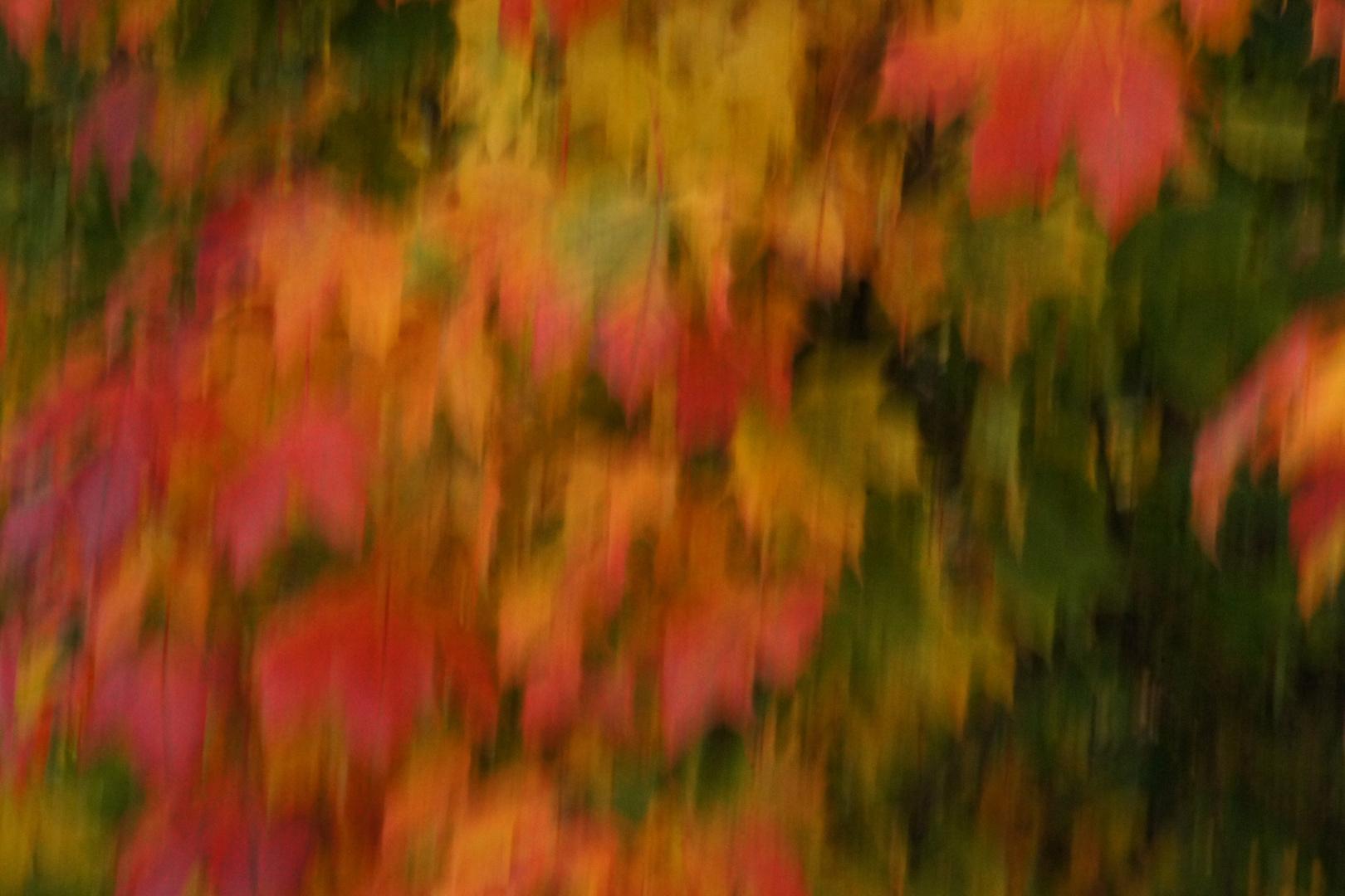 Herbtliche Blätterfarben 2