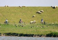 Herden, Horden und Scharen