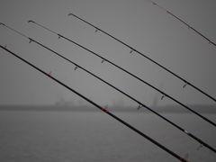 Hering oder Sprotte, das ist hier die Fangfrage!