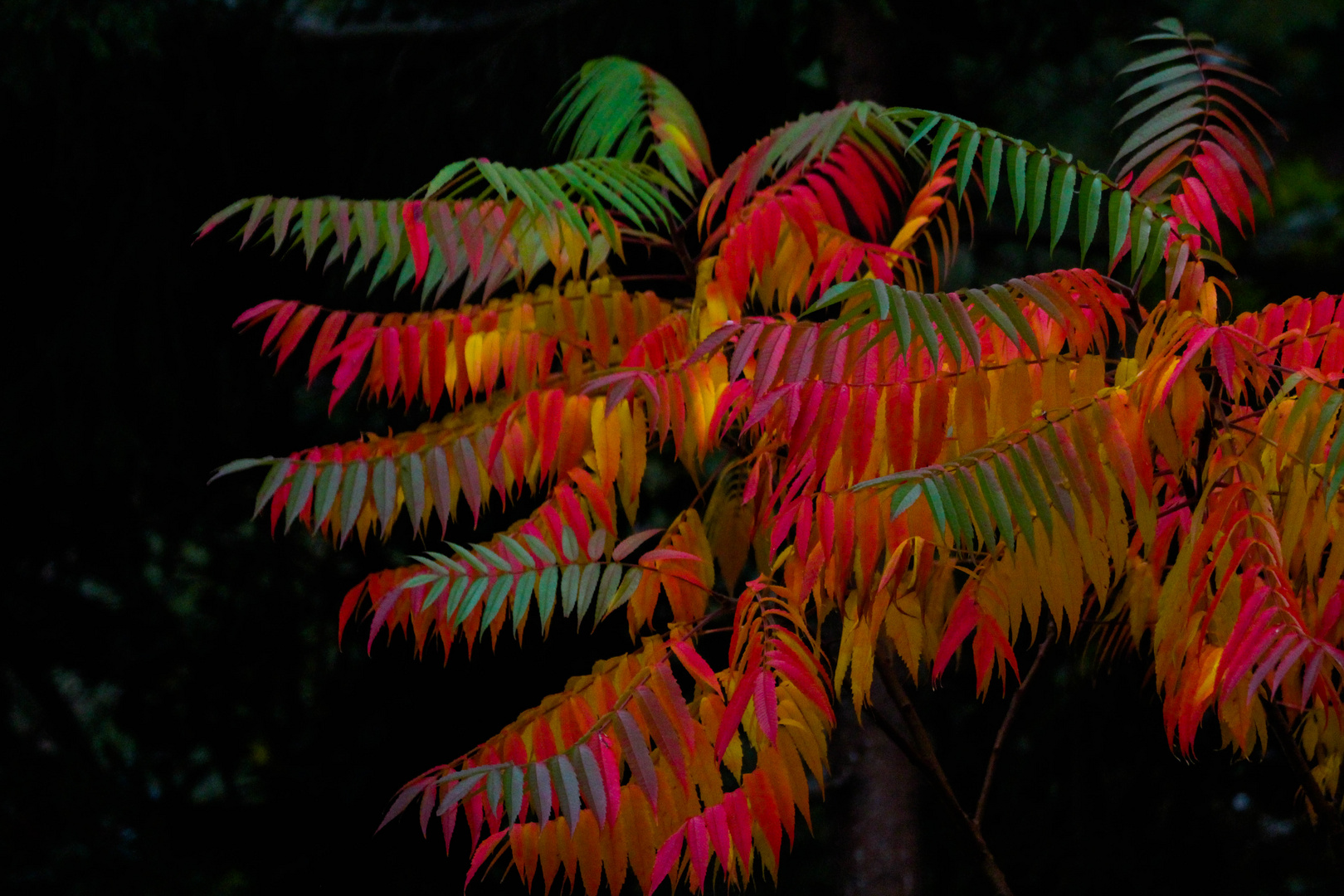herliche Herbstfarben