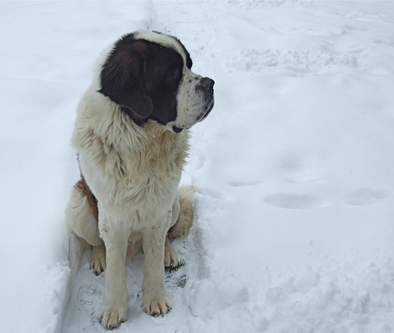 °°° Hermann's Augen im Schnee - nicht so einfach, sie überhaupt zu sehen °°°
