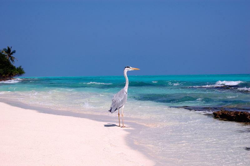 Heron at the lagoon
