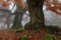 Herr der Ringe - die Ents im Herbstnebel