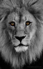 Herr König persönlich, Auge in Auge..............................#21.2756#06/50