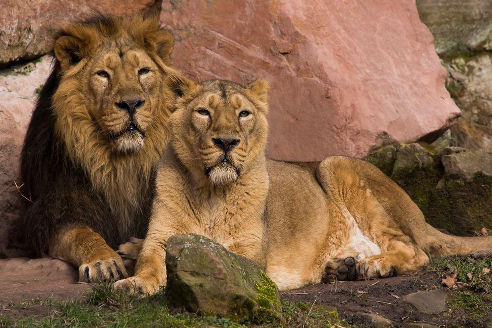 Herr und Frau König ...