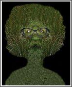 Herr von Gras