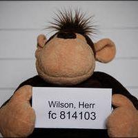 Herr Wilson