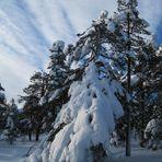 Herrlich viel Schnee