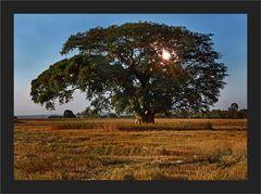 Herrlicher Baum