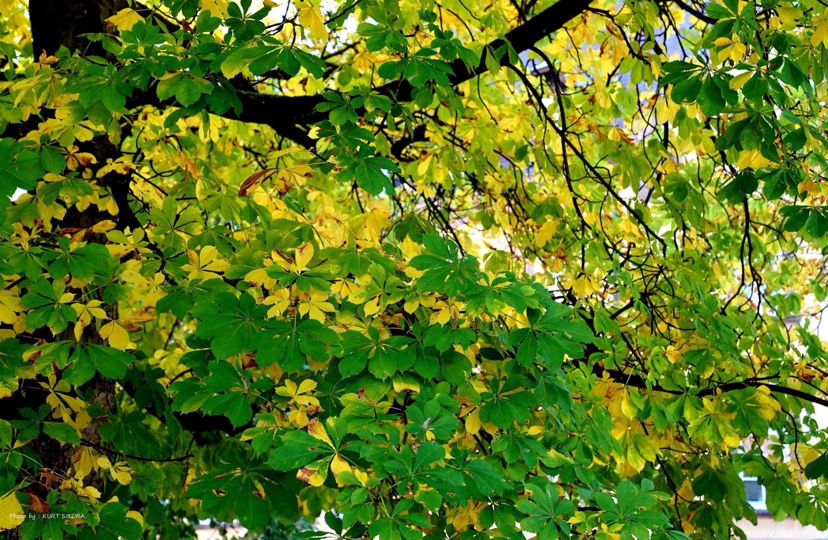 Herrlicher sonniger Herbsttag