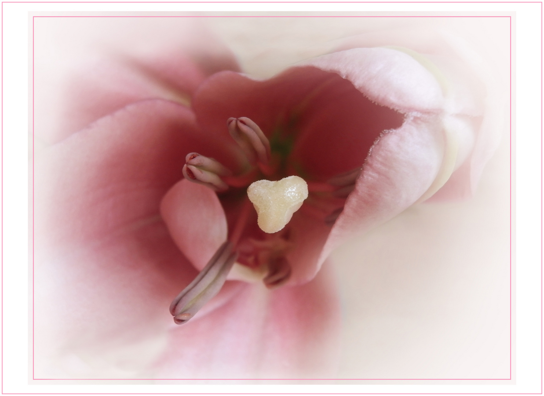 Herz einer Lilie