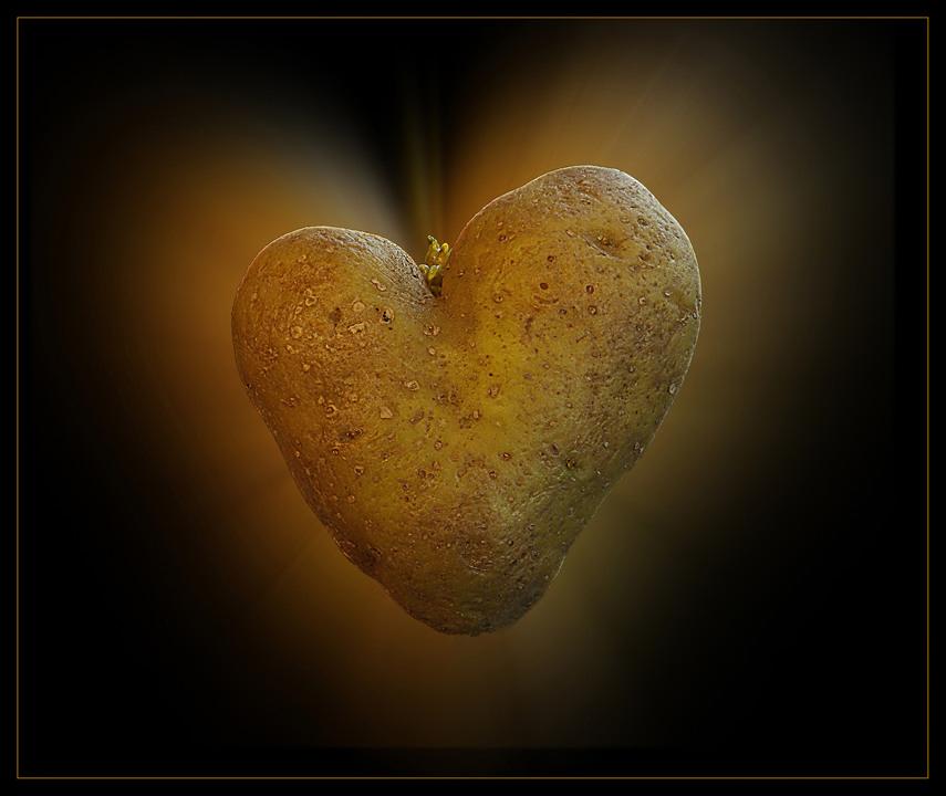 Herz...
