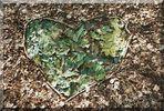 Herz I