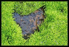 Herz im Moos