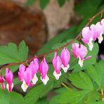 Herzige Blütengrüße