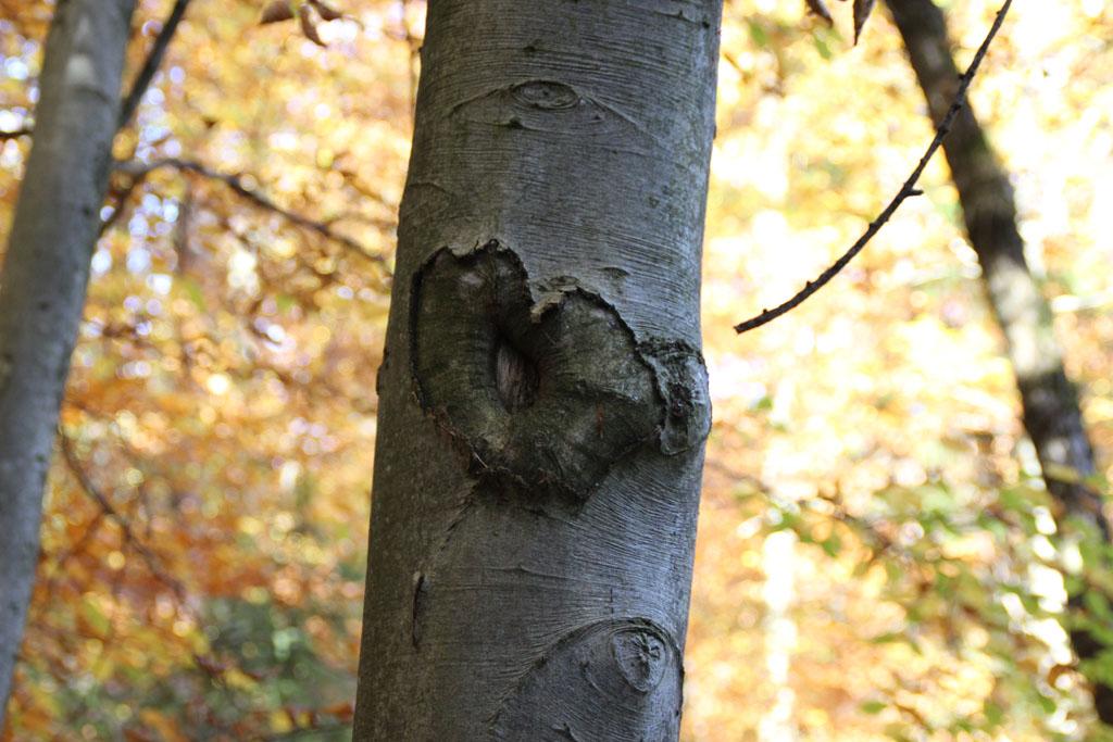 Herzliche Grüße vom Baum.